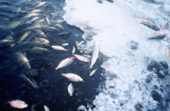 End of the World? Mass Animal Die-Off of Birds and Fish