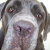 DogCancerDoctor profile image