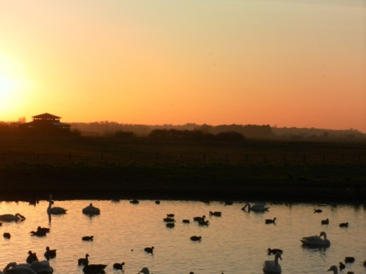 Sunset after the swan spectacular, Martin Mere