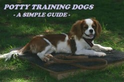 Potty Training Dogs - A Simple Guide