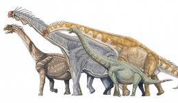 left to right Camarasaurus, Brachiosaurus, Giraffatitan, and Euhelopus