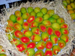 Health Benefits of Mango - Unknown Facts about Mango