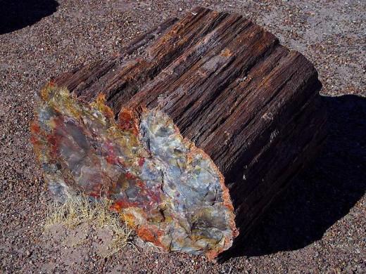 AZ State Fossil: Petrified Wood [3]