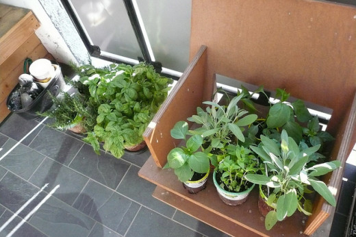 Basil, Sage, Rosemary and Peppers are a great combination for a small herb garden.