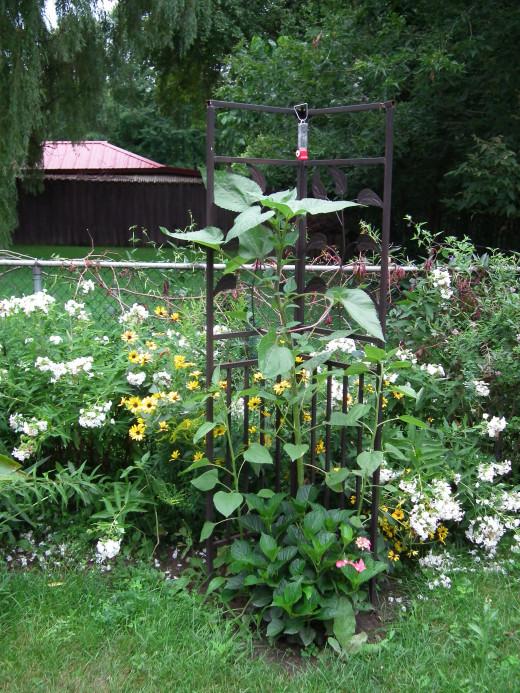Garden trellis with hummingbird feeder