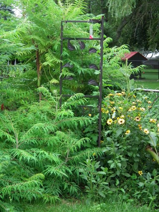 Garden trellis in the back yard