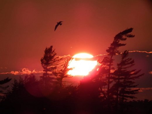 A Seagull at Sunset over Georgian Bay