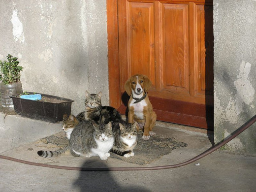 There are many stories of dogs and cats and other household animals' behavior changing