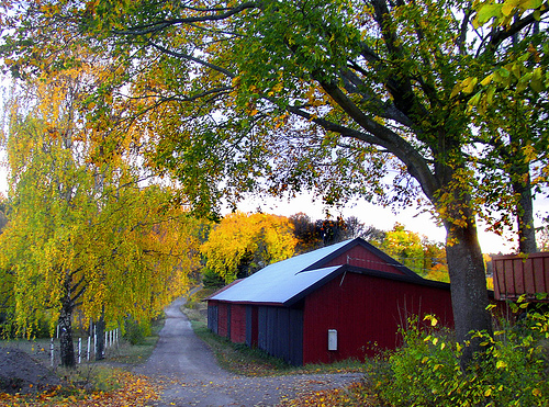 Not my barn and yard, but a similar look  http://www.flickr.com/photos/powi