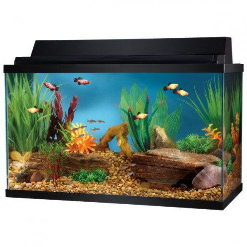 Setting up the perfect fresh water aquarium keeping your for 10 gallon fish tanks