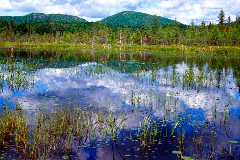 Heron Trail, Paul Smiths Visitor Center, Adirondack State Park, New York