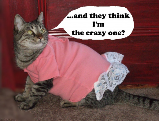 An unhappy cat in a dress.She has a point there.