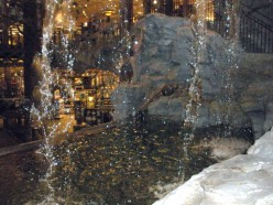 Looking down into fish tank from behind waterfall