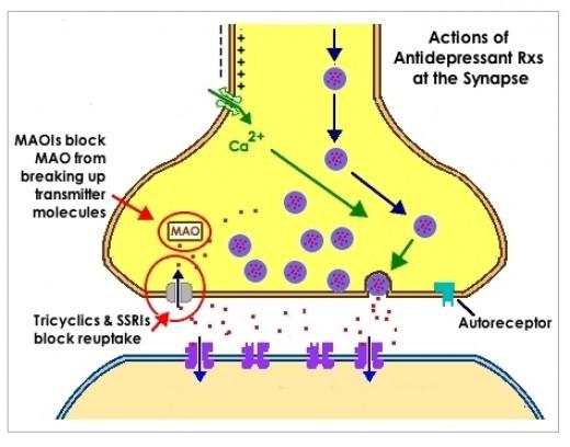 serotonin specific re-uptake inhibitors