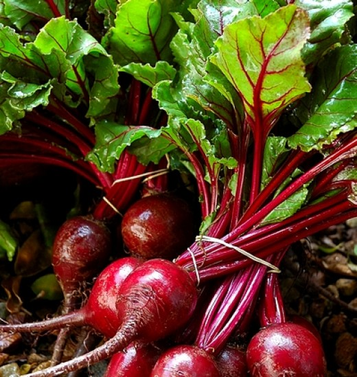Both the tops and roots of beets can be used for a variety of dishes. Beets are very nutritious providing many health benefits