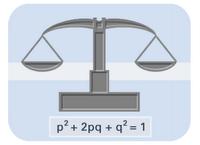 Hardy-Weinberg Equation