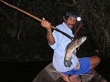 Fishing at night with spear