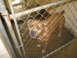 Learn more about animal rescue.
