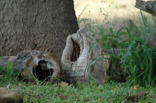 Stumps make good hiding places for birds