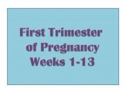How to Survive the First Trimester of Pregnancy