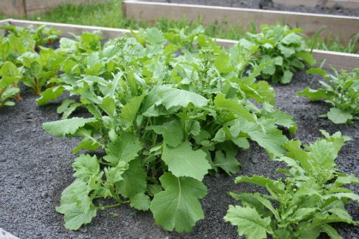 Vegetables benefit from the right soil pH.