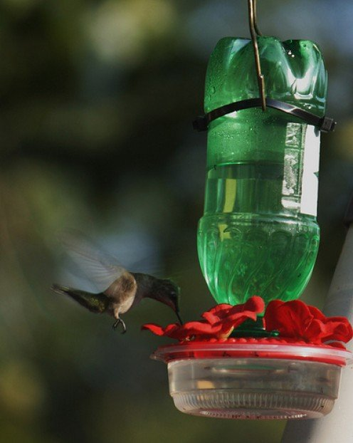 Hummingbirds are attracted to the color red, which is why hummingbird feeders always include at least one red component.