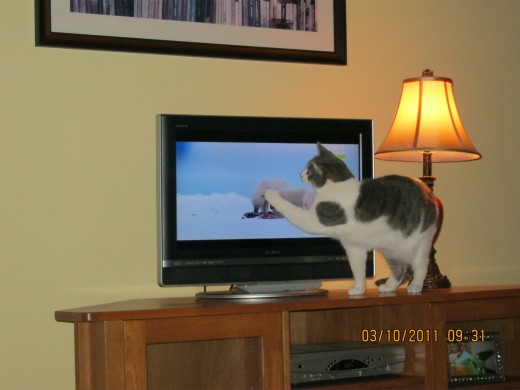 "Misty trying to smack a polar bear! That was her hobby when we would watch ""Animal Planet"" together."