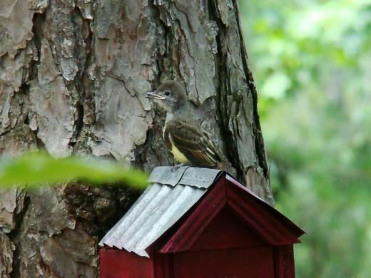 Sammy on top of birdhouse.