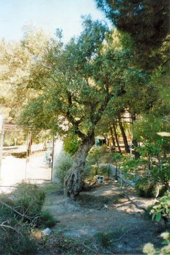 Where Lorca was believed to be buried and which his family had excavated searching for his remains that were never found.