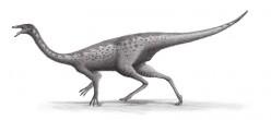 The Facts on the Mini Gallimimus Dinosaur