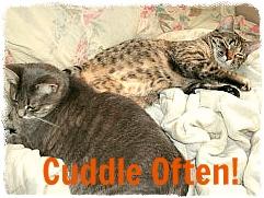 Cuddle Often!