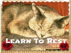 Ten Lessons I Learned From My Cats