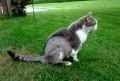 My Cat Beat Skin Cancer (Feline Subcutaneous Hemangiosarcoma)