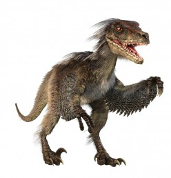 """Do you buy into the """"feathered dinosaur"""" theory that's being promoted by mainstream paleontology?"""