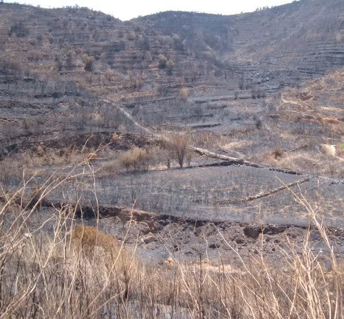 Erjos after forest fires in 2007. Photo by Steve Andrews