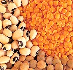 Beans, pulses and lentils are an excellent source of dietary iron