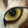 GoldenBird profile image