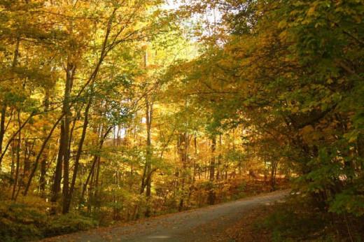 Autumn: Fall colors.