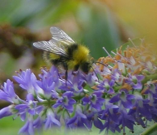 Sweet little bumble bee!
