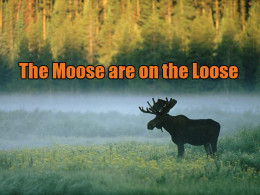 This silhouette of a bull moose was taken in Yellowstone Park.
