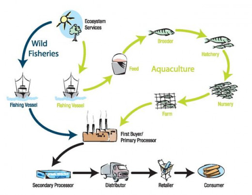 Figure 2. Visualization of the seafood distribution chain⁴