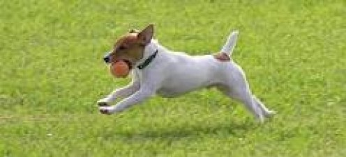 Play Fetch With Your Canine. They can get healthy by running and playing fetch but it's also something they love to do every minute.