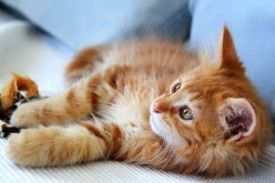 Tips on how to find a reputable dog or cat breeder