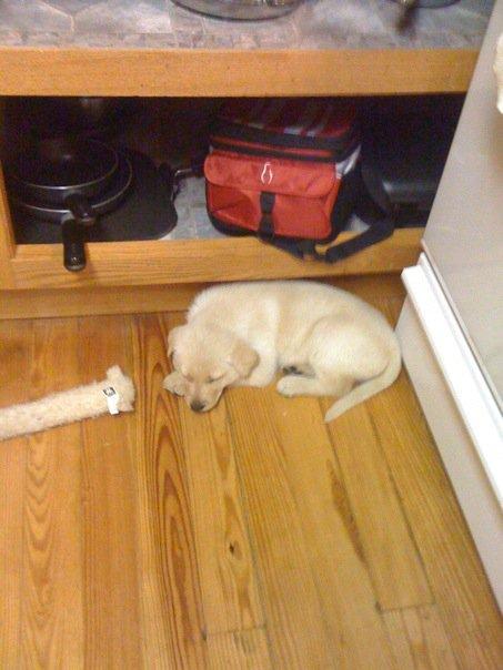 Chloe as a puppy