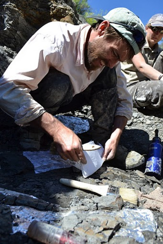 Dr. Pat Druckenmiller excavating a plesiosaur skull in Montana, July 2011.