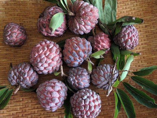 Some varieties of sugar apple have a red skin that look more striking. this variety is called Red variety Kampong Mauve
