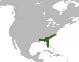 Eastern diamondback rattlesnake range.   By derivative work: IvanTortuga (talk) BlankAmericas.png: FB (BlankAmericas.png) [Public domain], via Wikimedia Commons
