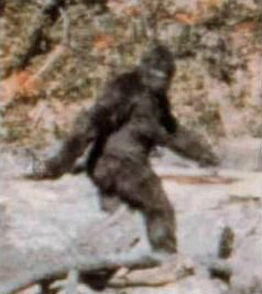 Frame 352 from the Patterson-Gimlin film