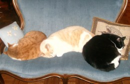 """Teach more complicated phrases by attaching them to common household scenes, such as """"the sleeping cats."""""""