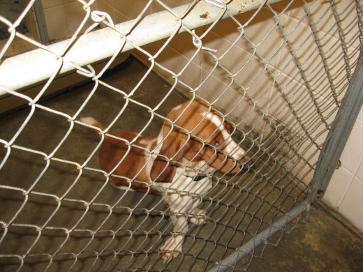 Housebreaking an older dog that's been in a shelter or kennel can be challenging.
